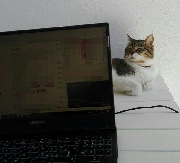 CAT Tool il traduttore professionista sa gestire la terminologia